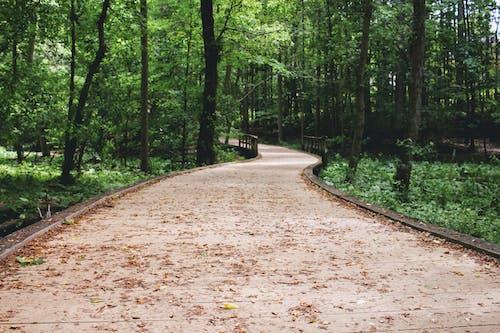 Immagine gratuita di avvolgimento, escursionismo, percorso
