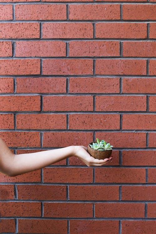 Kostenloses Stock Foto zu arm, backsteinmauer, draußen, festhalten