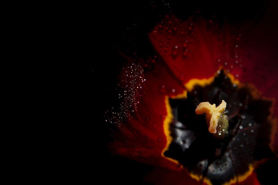 Free stock photo of flower in dark