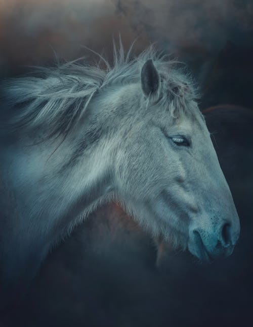 Obedient gray horse in misty paddock