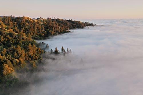Photos gratuites de à couper le souffle, à distance, arbre, atmosphère