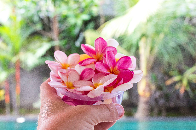 aromatic, beautiful, bloom