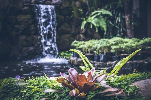 Fotos de stock gratuitas de agua, árbol, bonito, cascada