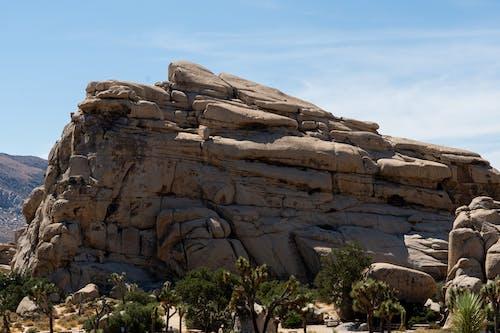 Ilmainen kuvapankkikuva tunnisteilla aavikko, autiomaa, joshua puu, kansallispuisto