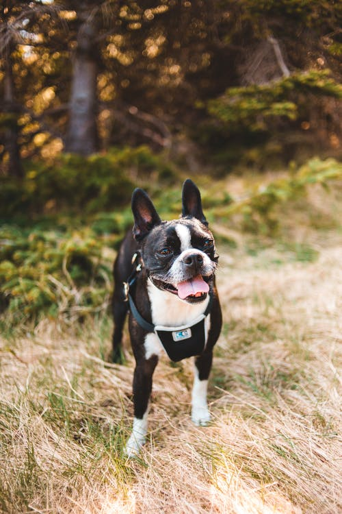 Playful purebred dog standing in park