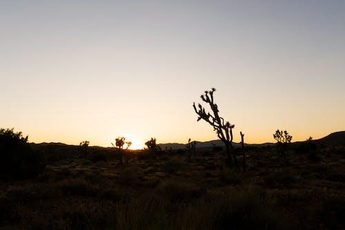 Ilmainen kuvapankkikuva tunnisteilla 4k taustakuva, aavikko, auringonlasku, autiomaa