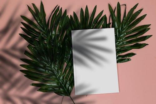 Gratis stockfoto met afzonderlijk, blad, boek flatlay, boom