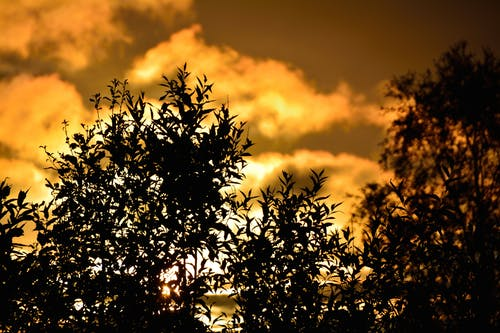 天空, 日出, 日落, 樹木 的 免費圖庫相片
