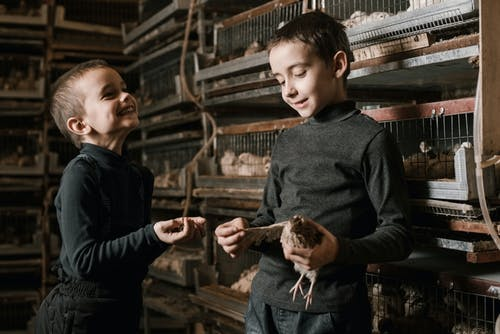 Delighted little boys with eggs and quail on fowl farm