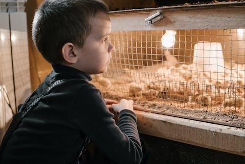 Imagine de stoc gratuită din adorabil, agricultură, animal