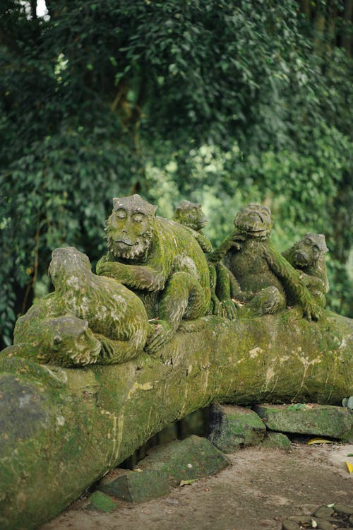 Moss grown sculptures of monkeys sitting on tree trunk in Sacred Monkey Forest Sanctuary also known as Mandala Suci Wenara Wana against lush tropical greenery in Bali