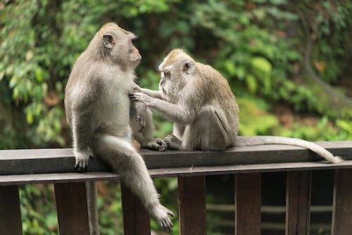 Monkeys sitting on wooden rail in rainforest