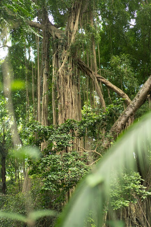 Tall green tropical trees in rainforest