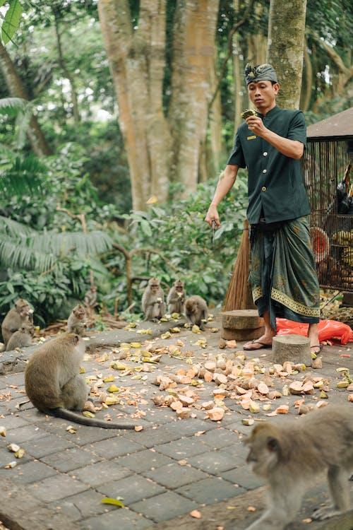 Ilmainen kuvapankkikuva tunnisteilla Aasia, aasialainen, apina, auringonpaiste