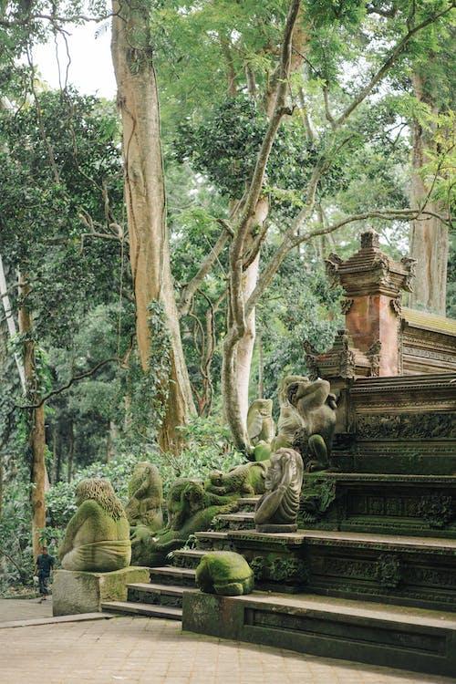 アジア, エキゾチック, エコロジーの無料の写真素材