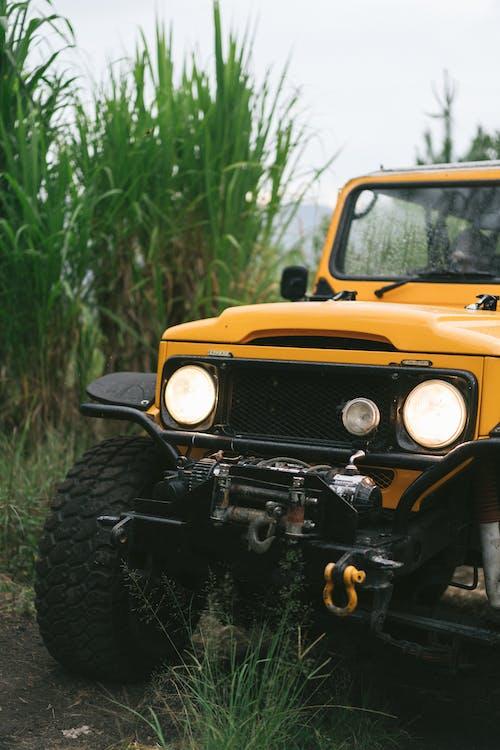 オフローダ, コンテンポラリー, シーン, ジャングルの無料の写真素材