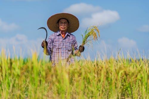 Foto stok gratis adat istiadat, agrikultura, alam