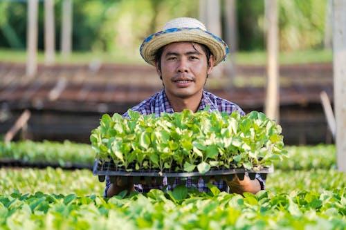 Foto profissional grátis de agricultor, agricultura, agronomia, alegre