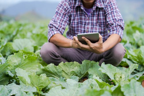 Crop man browsing tablet while monitoring temperature in greenhouse