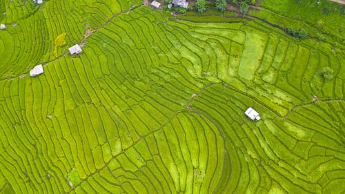 Agricultural plantation with green plants in countryside
