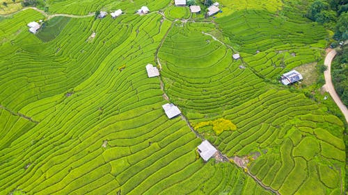 Rice paddy terraced fields in tropical country