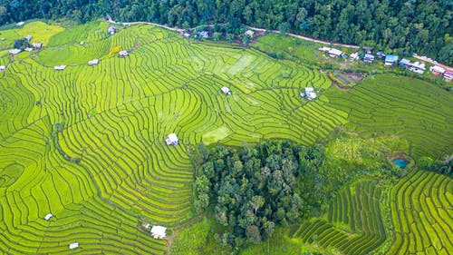 Rice paddy surrounded by lush green trees in countryside