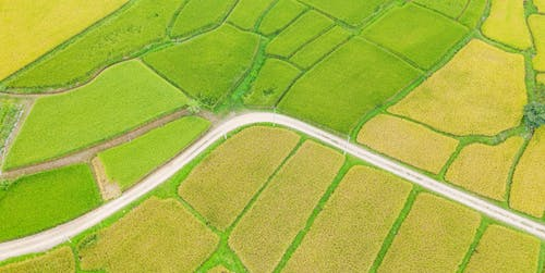 Scenery view of bright rice fields in countryside