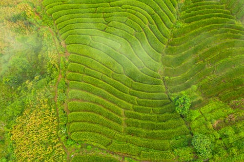Colorful agricultural fields with wavy furrows in summertime