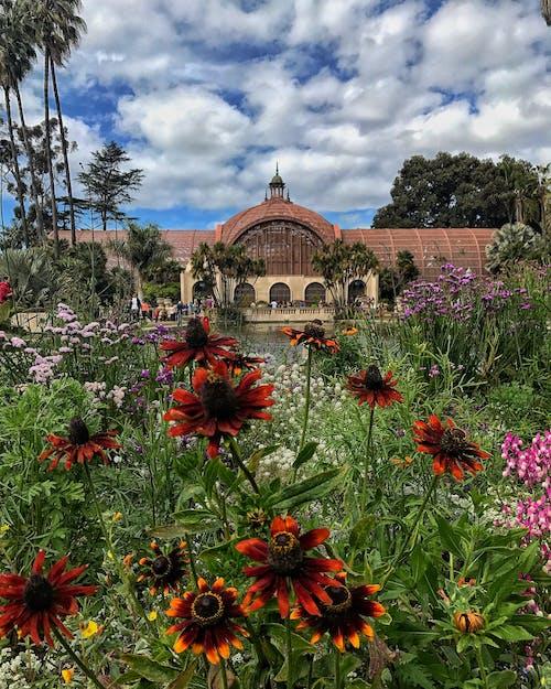 Základová fotografie zdarma na téma balboa parku, krásné květiny, krásný, květiny