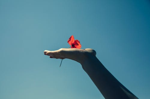 Person Holding Red Rose Under Blue Sky