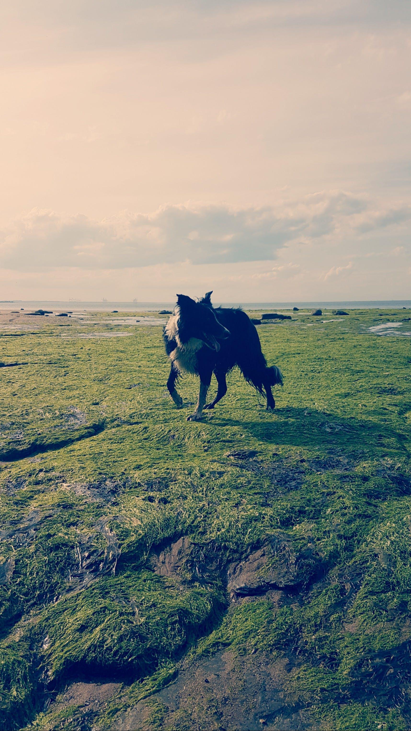 Free stock photo of animal, dog, sea, travel