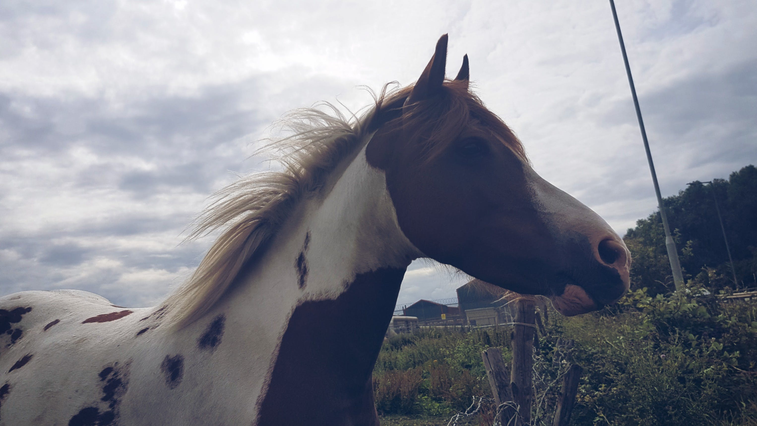 Free stock photo of animal, countryside, horse, sky