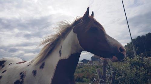 Foto d'estoc gratuïta de animal, cavall, cel