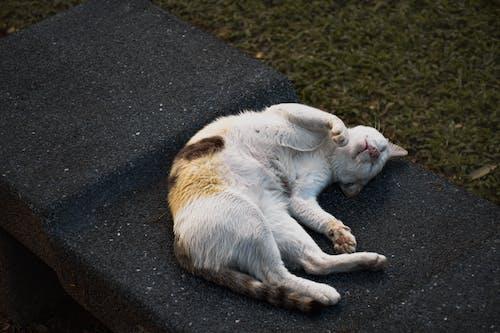Orange and White Cat Lying on Black Carpet