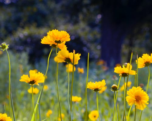 Darmowe zdjęcie z galerii z dziki kwiat, kwiaty, natura, rośliny