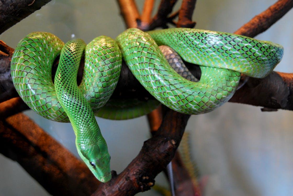 Free stock photo of blijdorp, boa, green