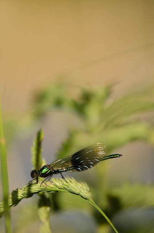 Green and Black Dragonfly on Green Plant