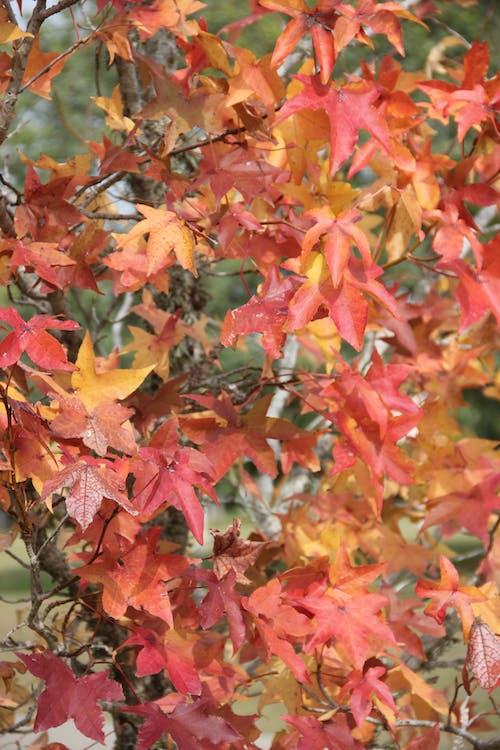Free stock photo of colores de otoño