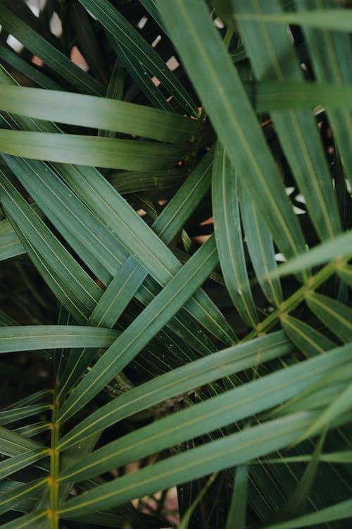 Free stock photo of beauty in nature, caribbean, dark green, dark green plants