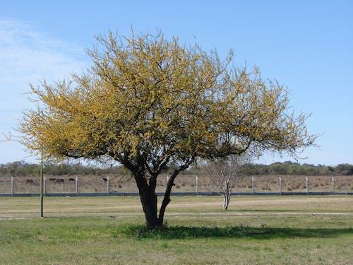 Free stock photo of arboles