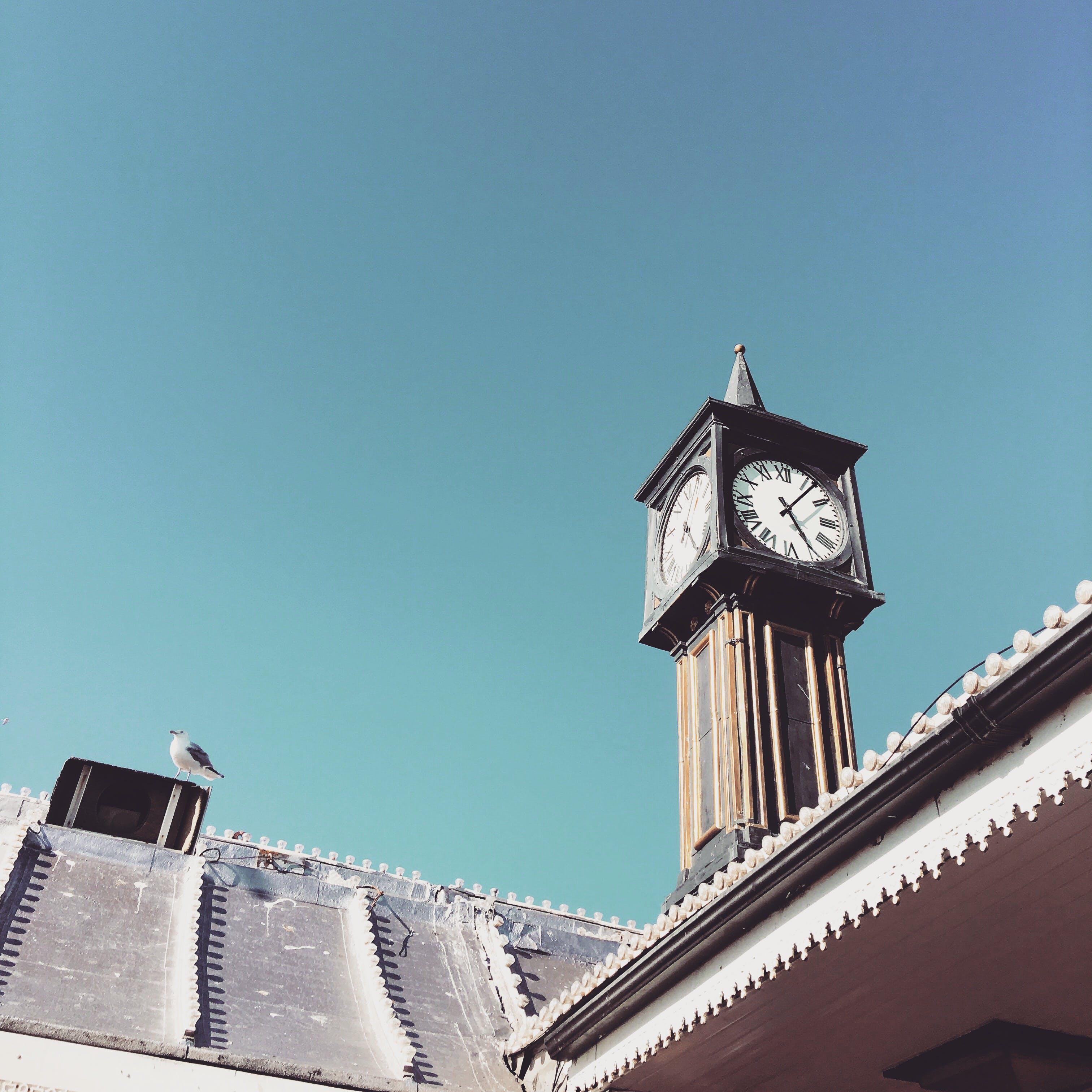 Free stock photo of blue sky, seagulls