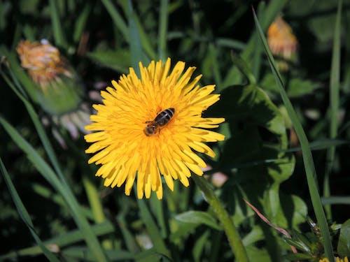 Free stock photo of berghang, Blumenwiese, insekt, wildblume