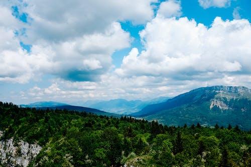 Δωρεάν στοκ φωτογραφιών με αυγή, βουνό, γρασίδι, δέντρο