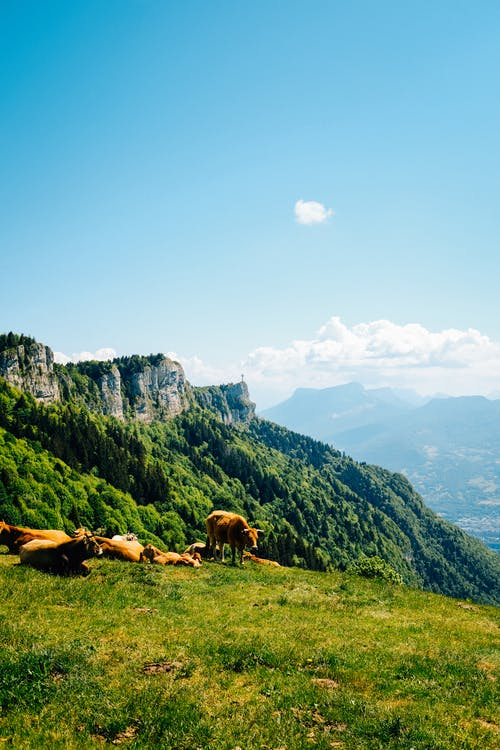 Kostenloses Stock Foto zu ackerland, außerorts, berg, draußen