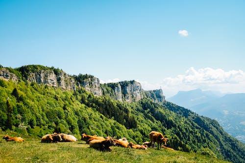 Horses on Green Grass Field Near Mountain
