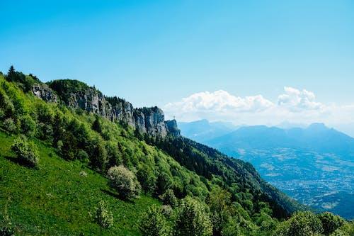 Δωρεάν στοκ φωτογραφιών με αγροτικός, βουνό, γρασίδι, δέντρο