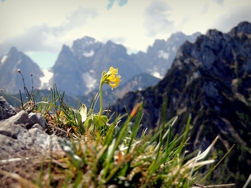 Free stock photo of Alpen, berg hintergrund, berggipfel, berghang