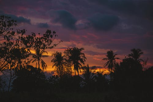 Immagine gratuita di alba, albero, crepuscolo, esotico