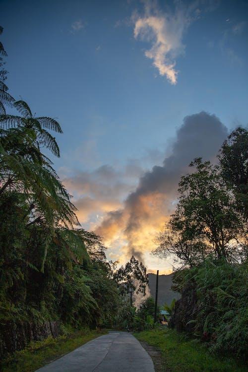 Immagine gratuita di acqua, alba, albero, autunno