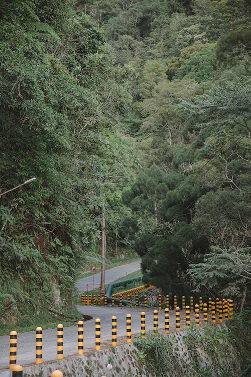 Free stock photo of bridge, environment, fall, footbridge